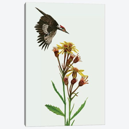 Tephroseris Flammea I Canvas Print #WNG259} by Melissa Wang Canvas Art Print