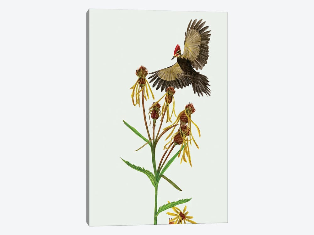 Tephroseris Flammea II by Melissa Wang 1-piece Canvas Art