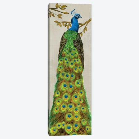 Vintage Peacock I Canvas Print #WNG270} by Melissa Wang Art Print