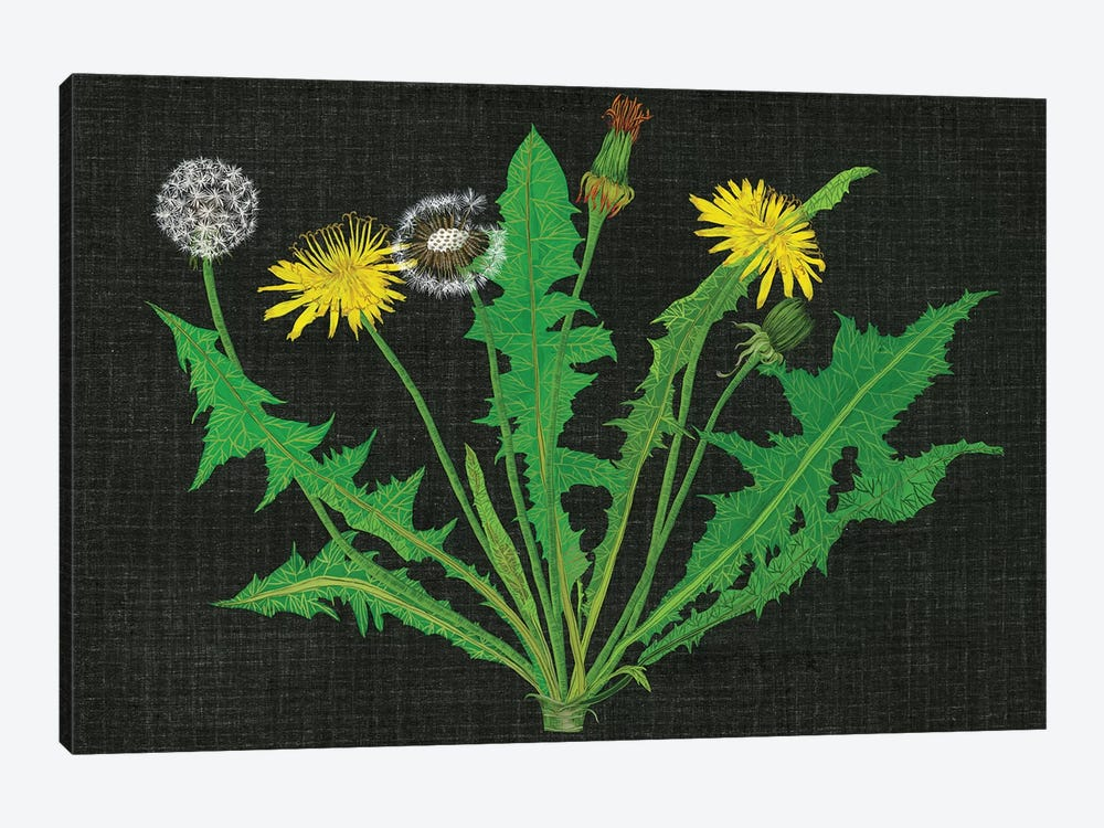 Wild Dandelion I by Melissa Wang 1-piece Canvas Art Print