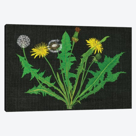 Wild Dandelion I Canvas Print #WNG278} by Melissa Wang Canvas Print