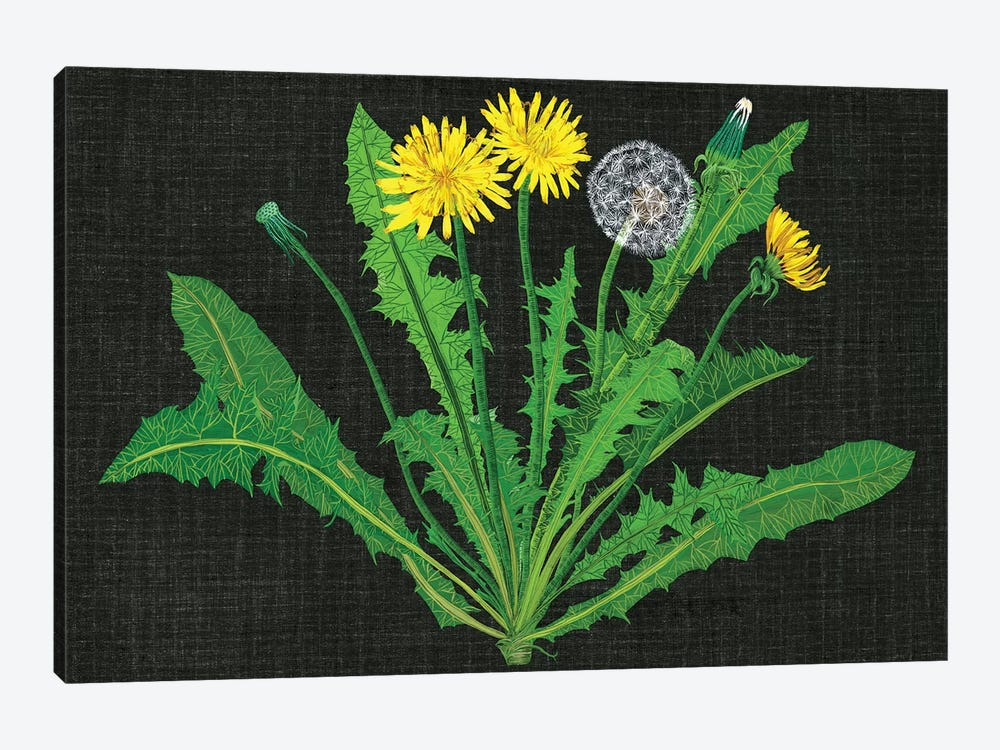 Wild Dandelion II 1-piece Canvas Wall Art