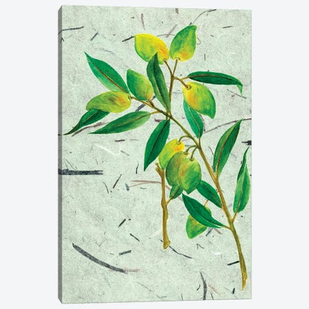 Olives On Textured Paper I Canvas Print #WNG27} by Melissa Wang Canvas Wall Art