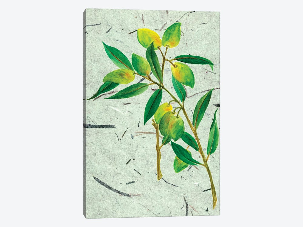 Olives On Textured Paper I by Melissa Wang 1-piece Canvas Print