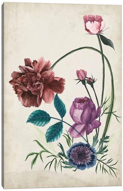Antique Peony II Canvas Art Print