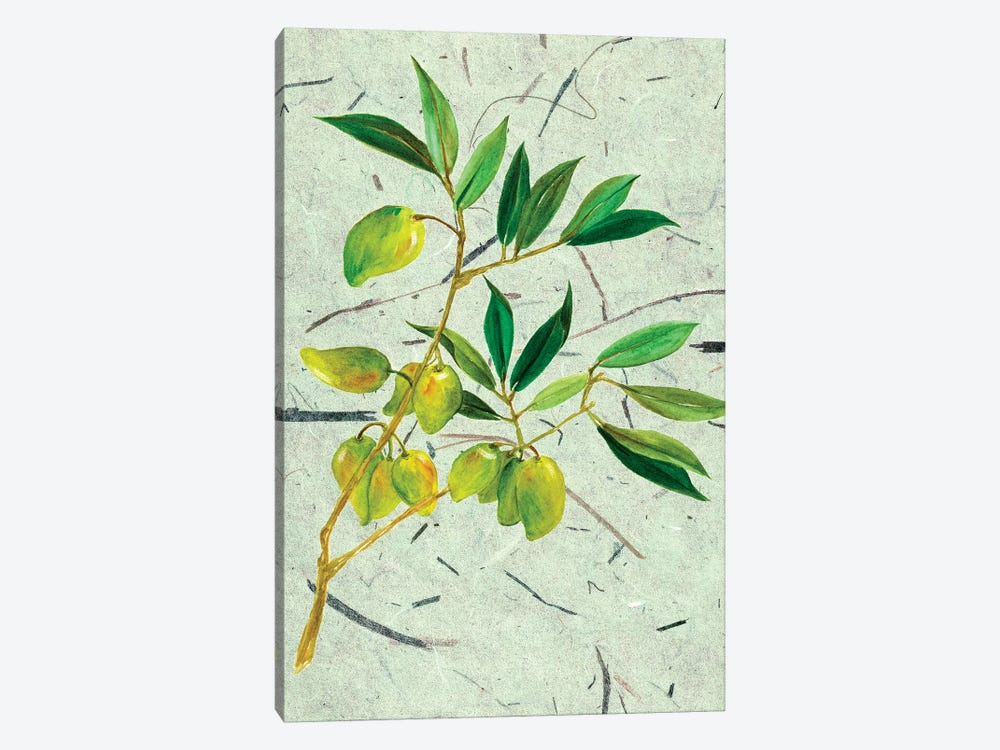 Olives On Textured Paper II by Melissa Wang 1-piece Canvas Art