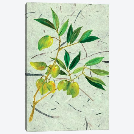 Olives On Textured Paper II Canvas Print #WNG28} by Melissa Wang Canvas Print