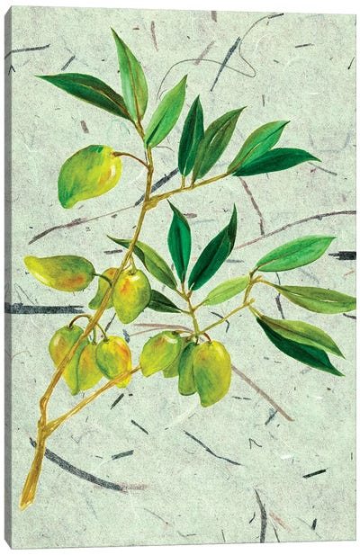 Olives On Textured Paper II Canvas Art Print