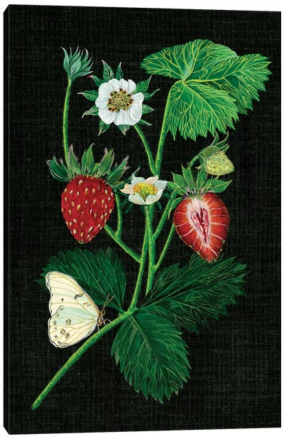 Strawberry Fields I Canvas Print #WNG29