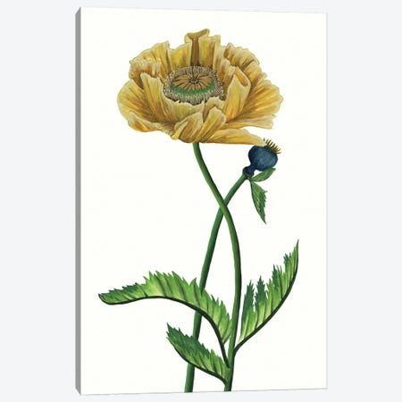 Poppy Flower I Canvas Print #WNG324} by Melissa Wang Canvas Wall Art