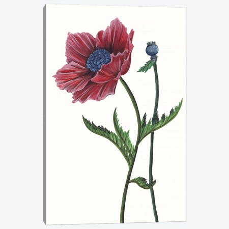 Poppy Flower II Canvas Print #WNG325} by Melissa Wang Canvas Art