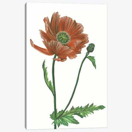 Poppy Flower III Canvas Print #WNG326} by Melissa Wang Canvas Art