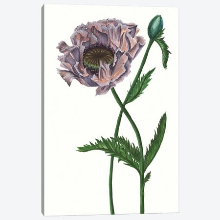 Poppy Flower IV Canvas Print #WNG327} by Melissa Wang Canvas Art