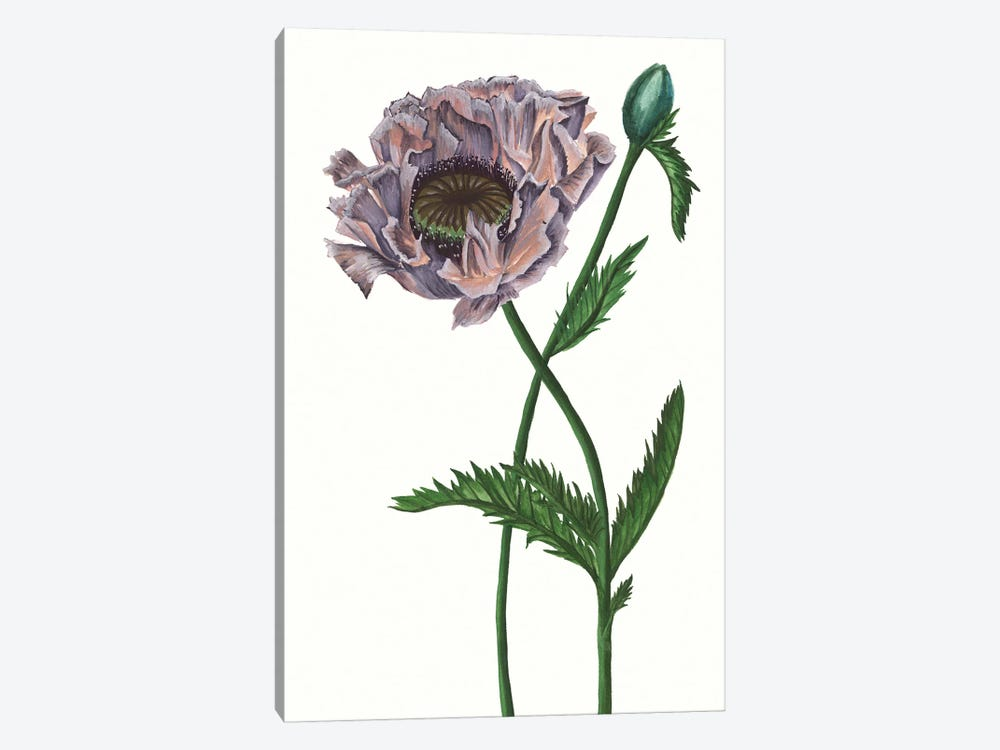 Poppy Flower IV 1-piece Canvas Art