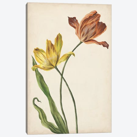 Two Tulips I Canvas Print #WNG346} by Melissa Wang Canvas Wall Art