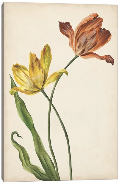 Two Tulips I Canvas Art Print