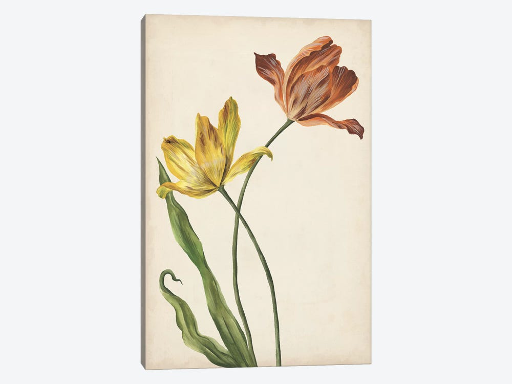 Two Tulips I by Melissa Wang 1-piece Canvas Art Print