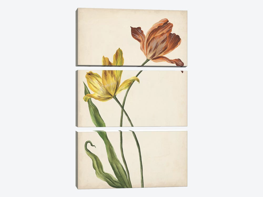 Two Tulips I by Melissa Wang 3-piece Canvas Print