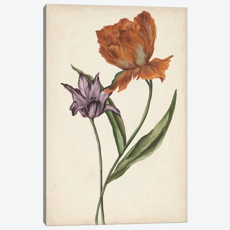 Two Tulips II Canvas Print #WNG347} by Melissa Wang Canvas Wall Art
