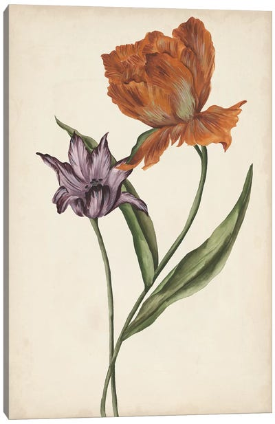 Two Tulips II Canvas Art Print