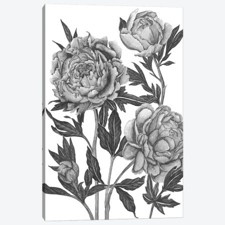 Flowers In Grey V Canvas Print #WNG362} by Melissa Wang Art Print