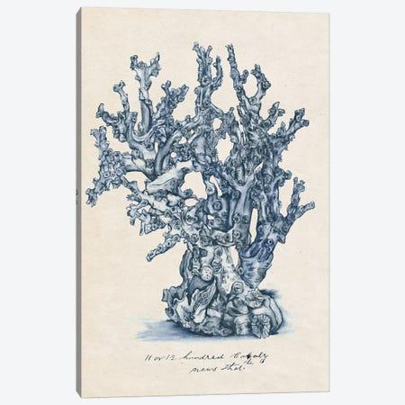 Sea Coral Study IV Canvas Print #WNG379} by Melissa Wang Canvas Artwork