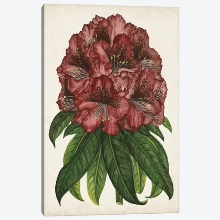Rhododendron Study I Canvas Print #WNG436} by Melissa Wang Canvas Wall Art