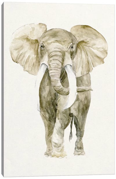 Baby Elephant I Canvas Print #WNG51