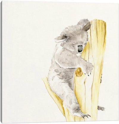 Baby Koala I Canvas Print #WNG53