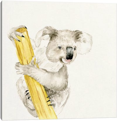 Baby Koala II Canvas Print #WNG54