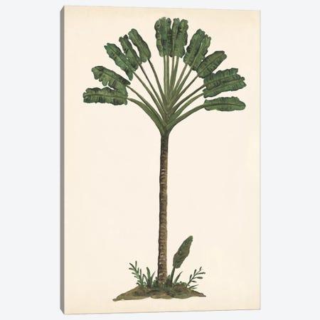 Palm Tree Study I Canvas Print #WNG560} by Melissa Wang Canvas Print