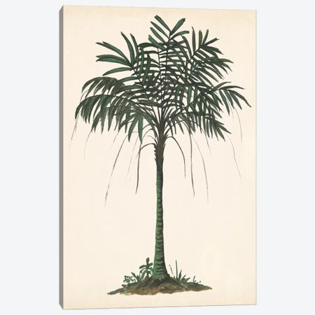Palm Tree Study II Canvas Print #WNG561} by Melissa Wang Canvas Art Print