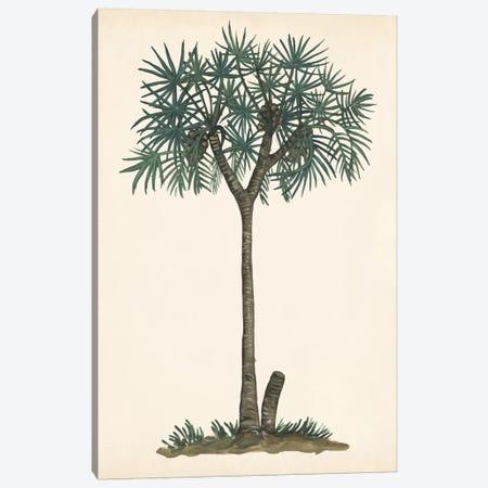 Palm Tree Study III Canvas Print #WNG562} by Melissa Wang Canvas Print