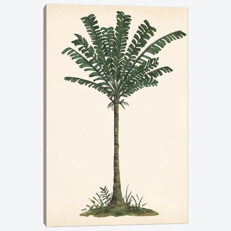Palm Tree Study IV Canvas Print #WNG563} by Melissa Wang Canvas Art Print