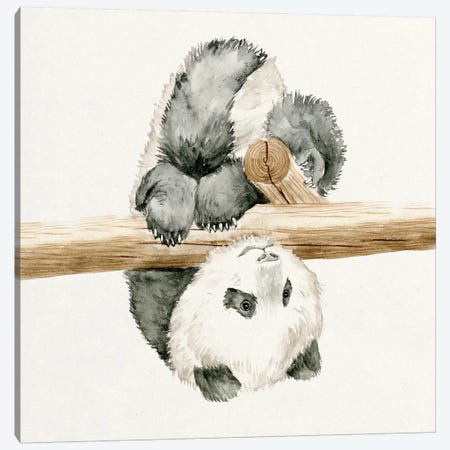 Baby Panda II Canvas Print #WNG56} by Melissa Wang Canvas Print