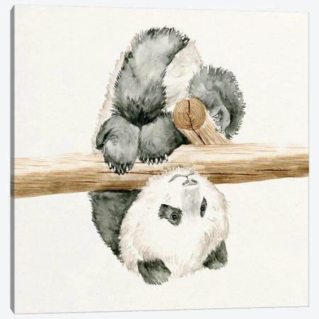 Baby Panda II Canvas Print #WNG56} by Melissa Wang Canvas Print