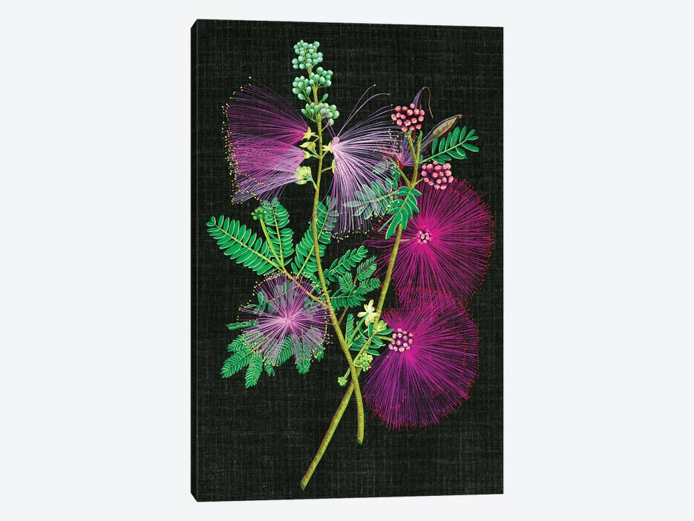 Calliandra Surinamensis I by Melissa Wang 1-piece Canvas Art Print