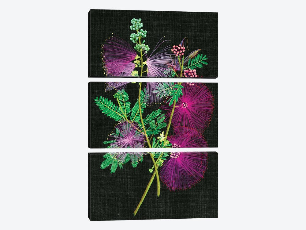 Calliandra Surinamensis I by Melissa Wang 3-piece Canvas Print