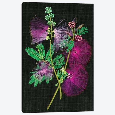 Calliandra Surinamensis I Canvas Print #WNG61} by Melissa Wang Canvas Art Print