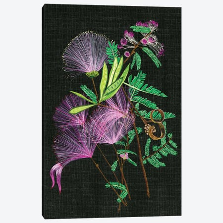 Calliandra Surinamensis II Canvas Print #WNG62} by Melissa Wang Art Print