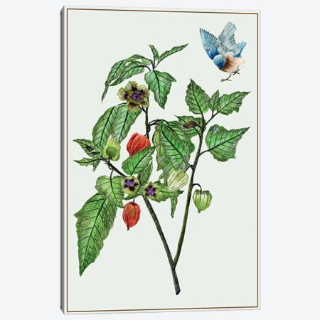 Cape Gooseberry I Canvas Print #WNG63} by Melissa Wang Art Print