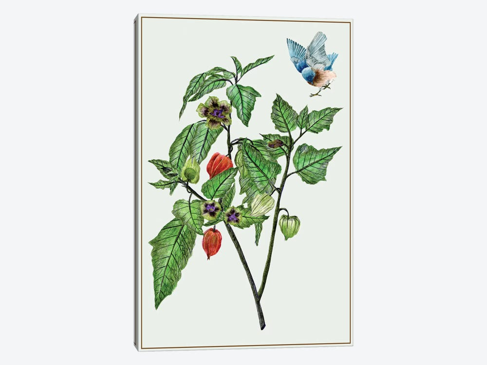 Cape Gooseberry I by Melissa Wang 1-piece Art Print