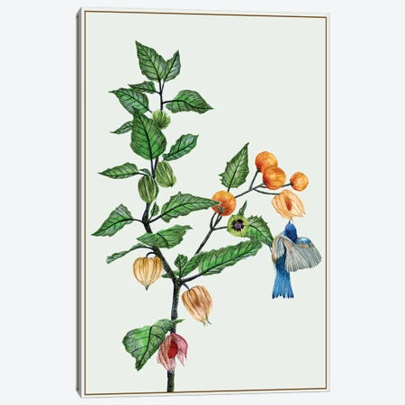 Cape Gooseberry II Canvas Print #WNG64} by Melissa Wang Canvas Wall Art