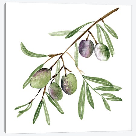 Olive Branch I Canvas Print #WNG664} by Melissa Wang Canvas Print