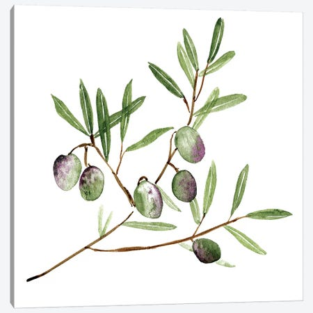 Olive Branch II Canvas Print #WNG665} by Melissa Wang Canvas Print