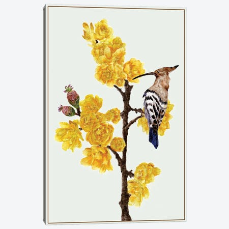 Chimonanthus Praecox II Canvas Print #WNG66} by Melissa Wang Canvas Wall Art