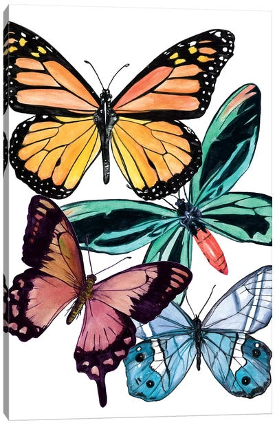 Butterfly Swatches I Canvas Art Print