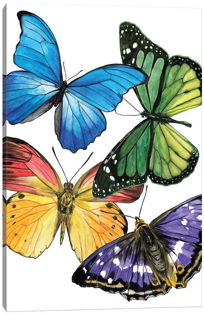 Butterfly Swatches II Canvas Art Print