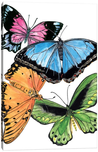 Butterfly Swatches III Canvas Art Print