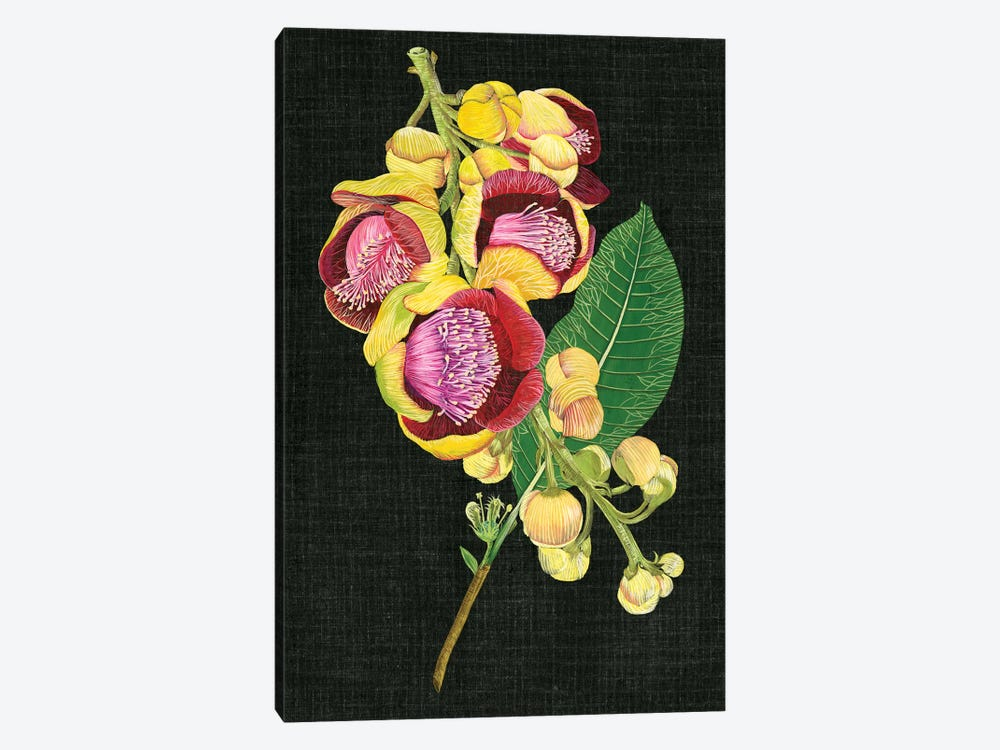 Couroupita Guianensis I by Melissa Wang 1-piece Canvas Artwork